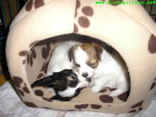 Die Beiden in ihrer Hütte